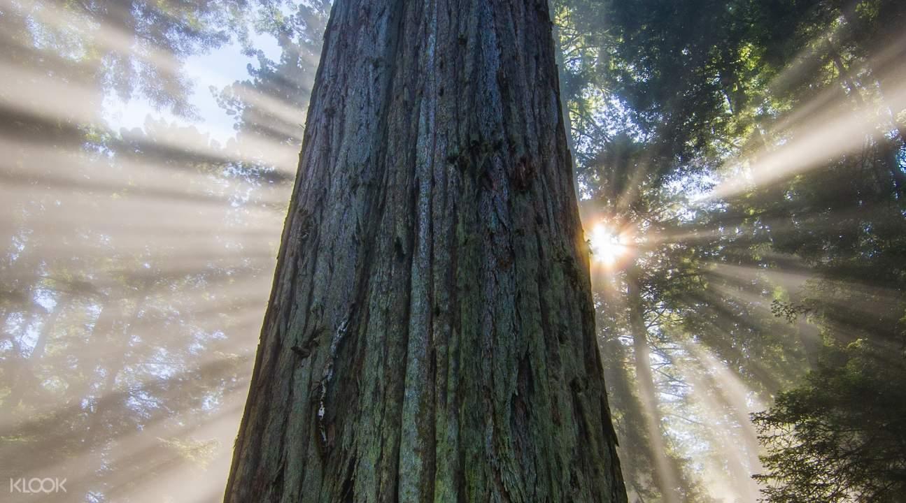 红木森林及索萨利托小镇半日游