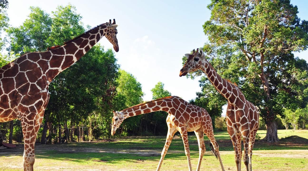 科隆卡拉威特岛野生动物之旅