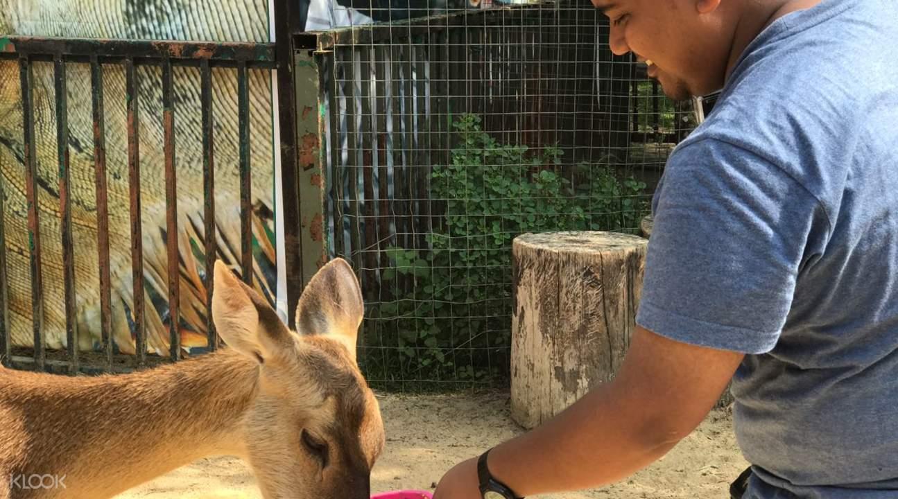 兰卡威野生动物园 喂食