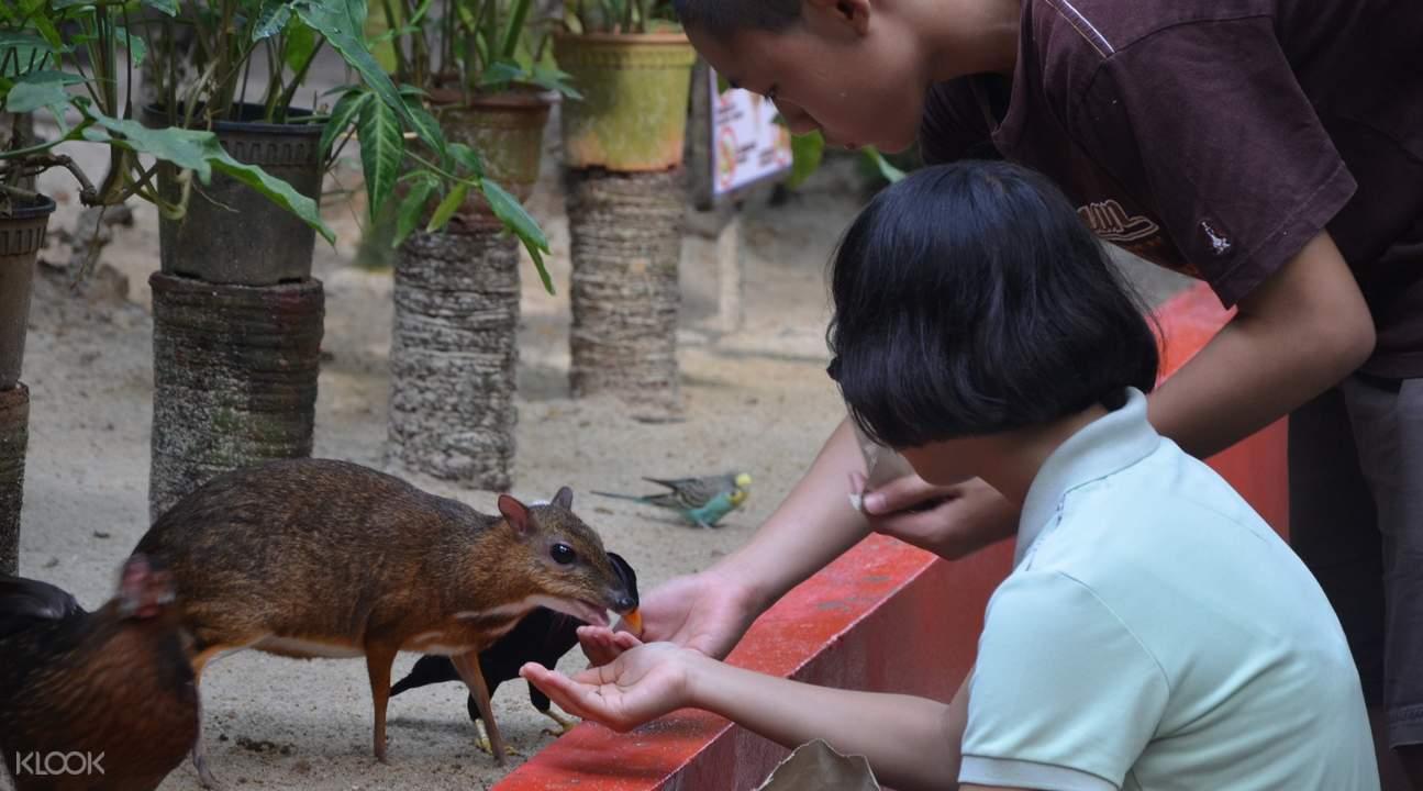 蘭卡威野生動物園餵養