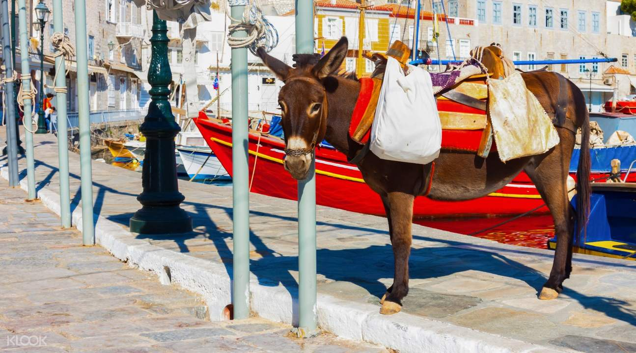 aegina day cruise from athens