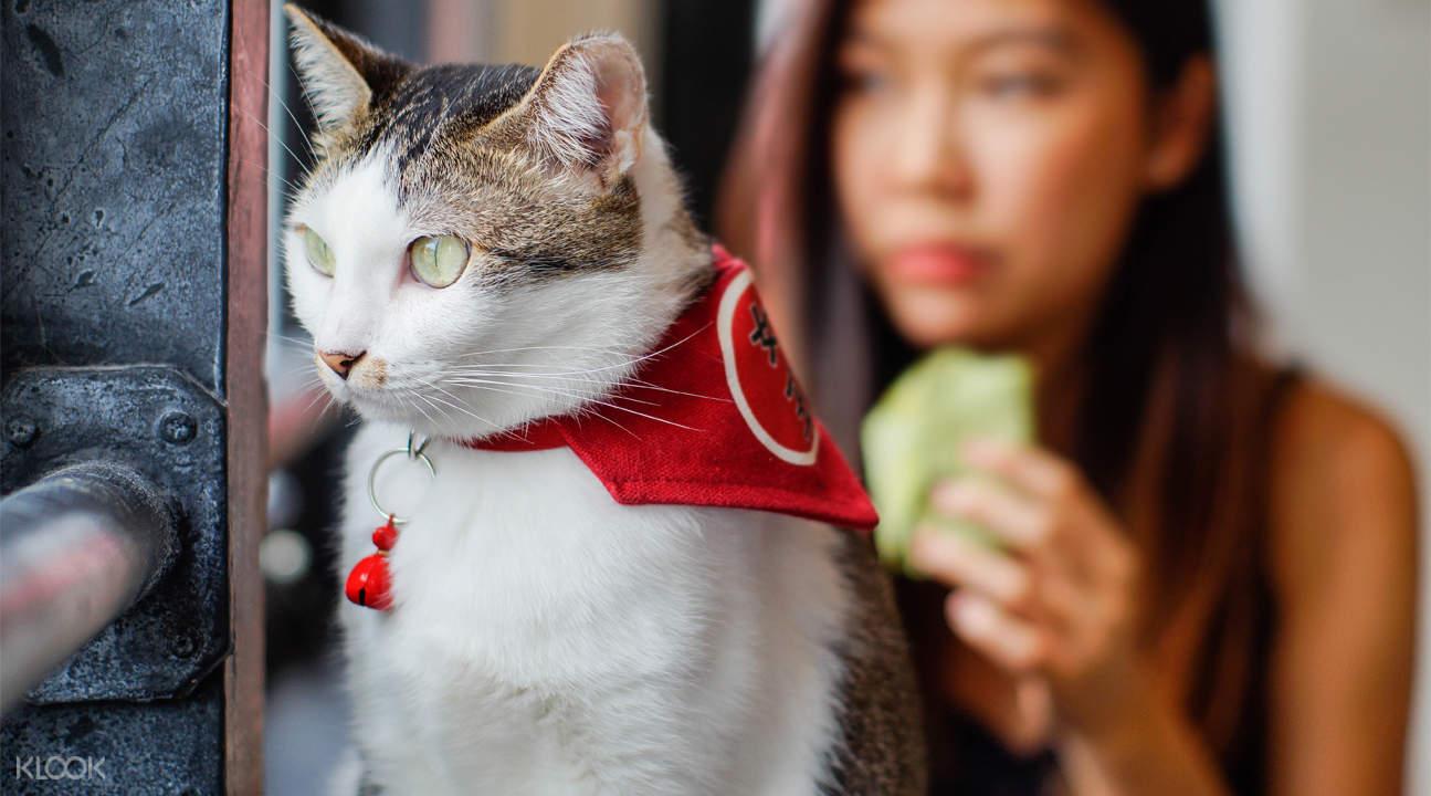Cat Cafe photo-op