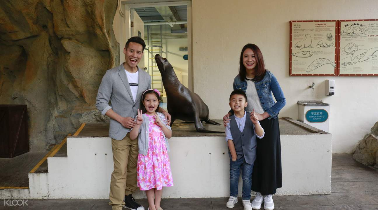 香港海洋公園約會海獅體驗