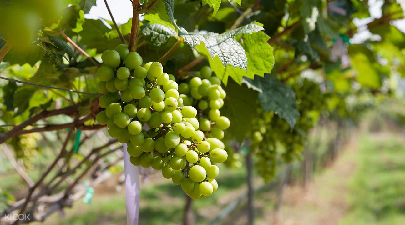 私人導覽 華欣巴拉吳瀑布 & 葡萄酒莊園一日遊
