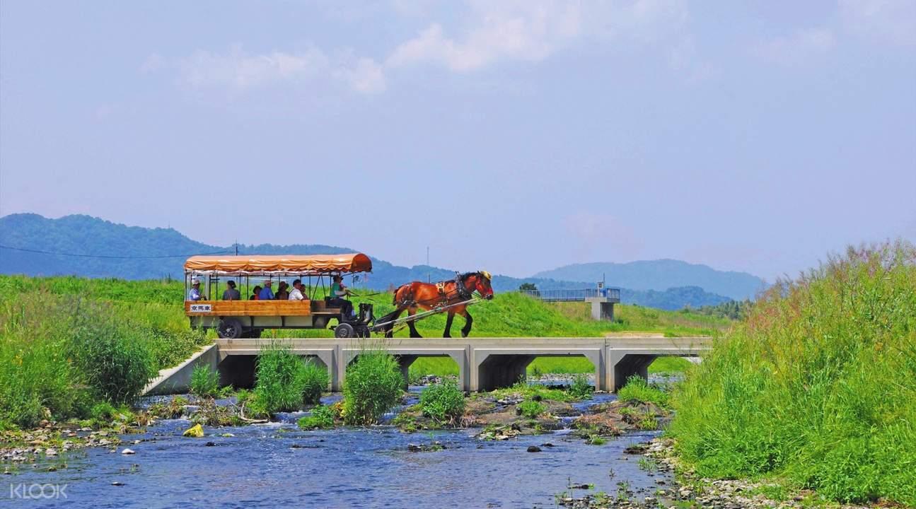 嵯峨野观光马车游览