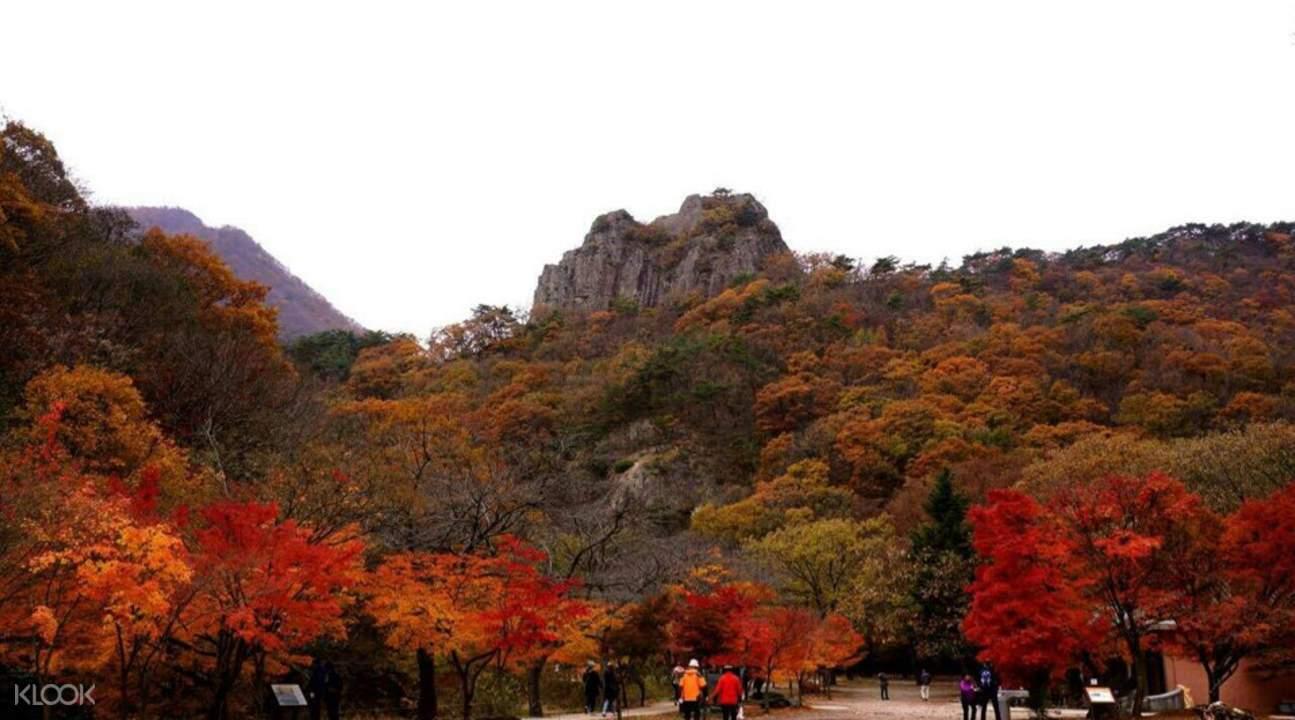 内藏山公园赏枫之旅