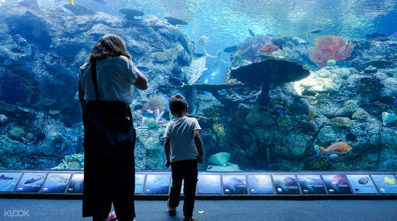 太平洋水族馆门票