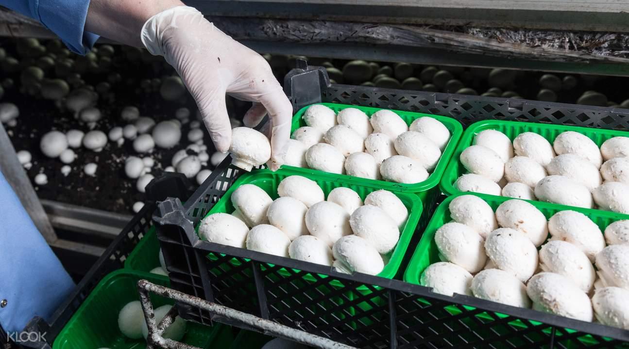 蘑菇生态农场