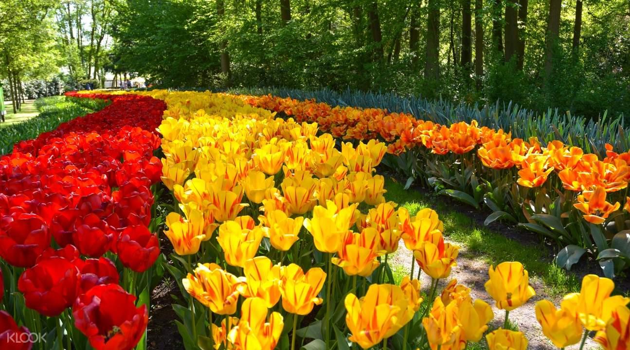 荷蘭庫肯霍夫公園鬱金香一日遊