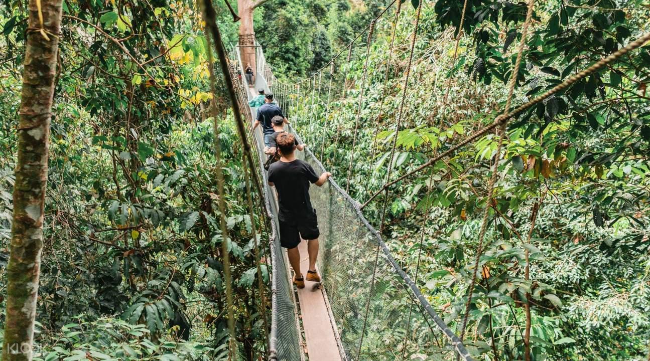 people walking on rope bridge Kinabalu Park Malaysia
