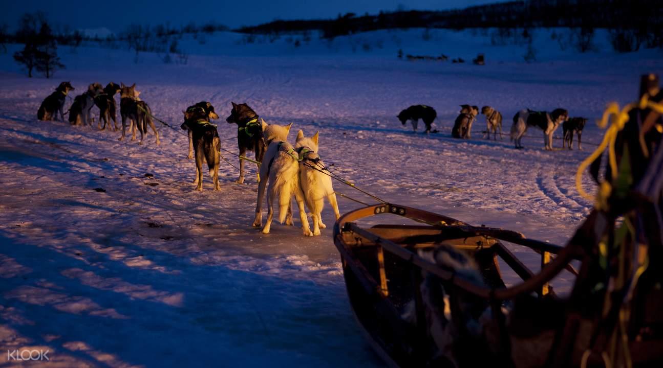 哈士奇雪橇队