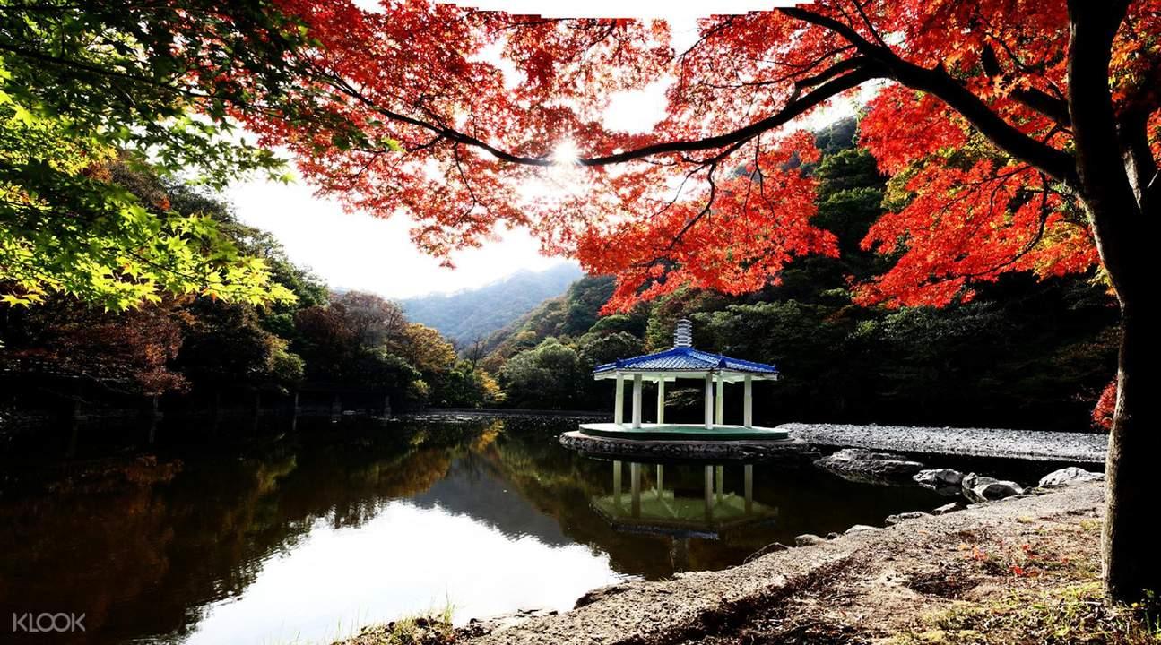 內藏山賞楓一日遊