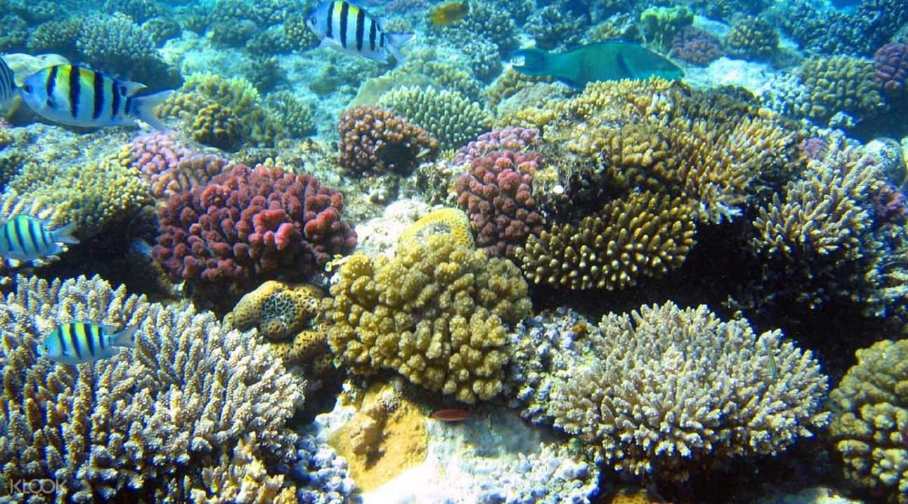 coral reefs under marine park