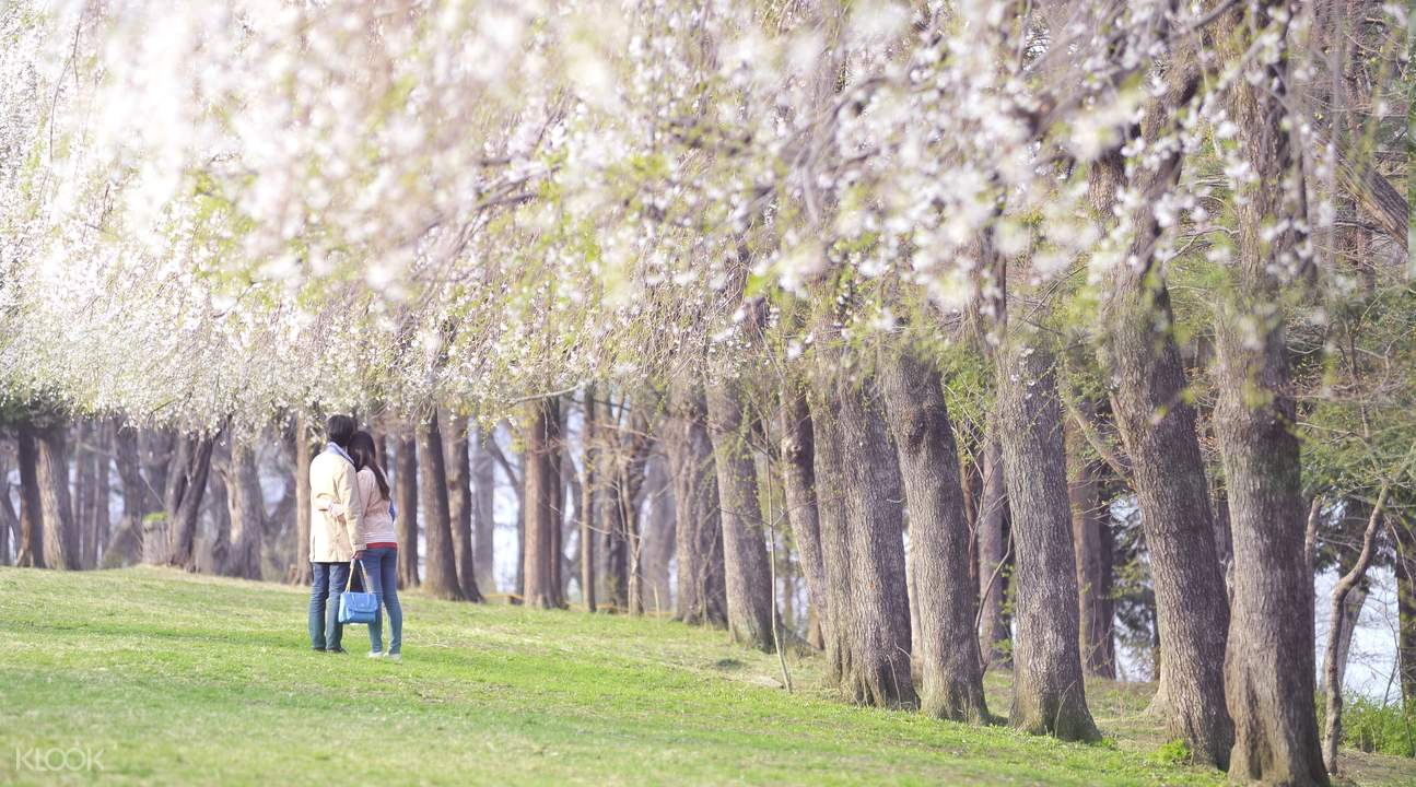 Nami Island, Garden of Morning Calm & More - Seoul, South