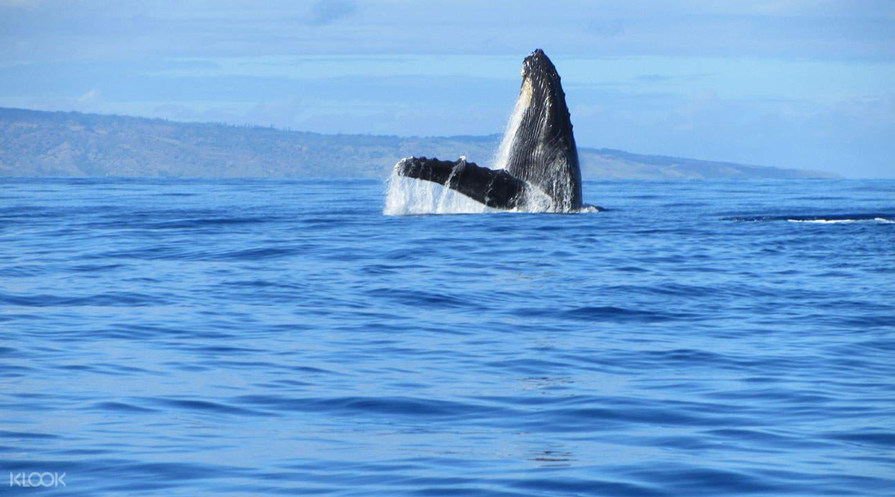 Kealakekua灣橡皮筏探險+ 浮潛
