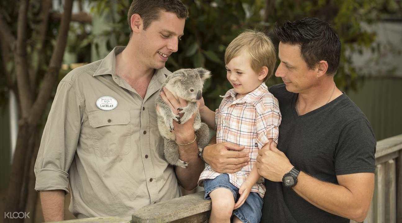 where to see koalas near Brisbane