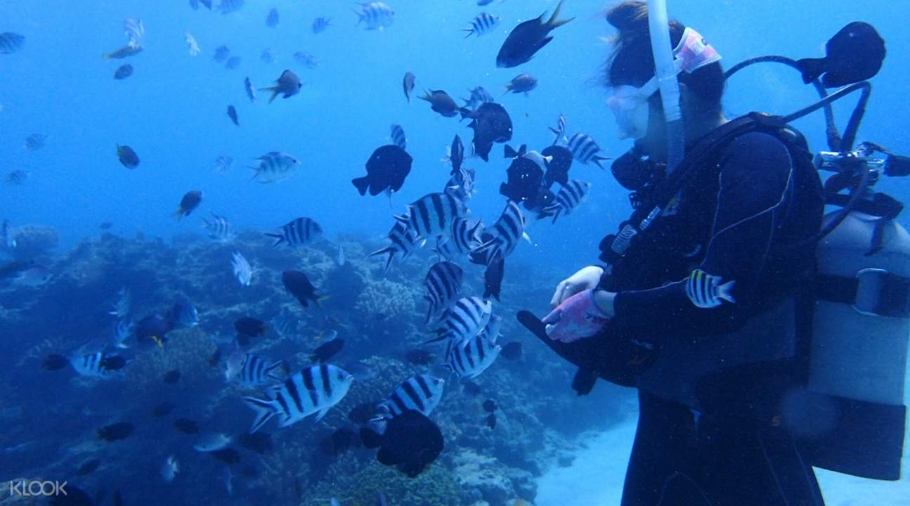 northern okinawa diving
