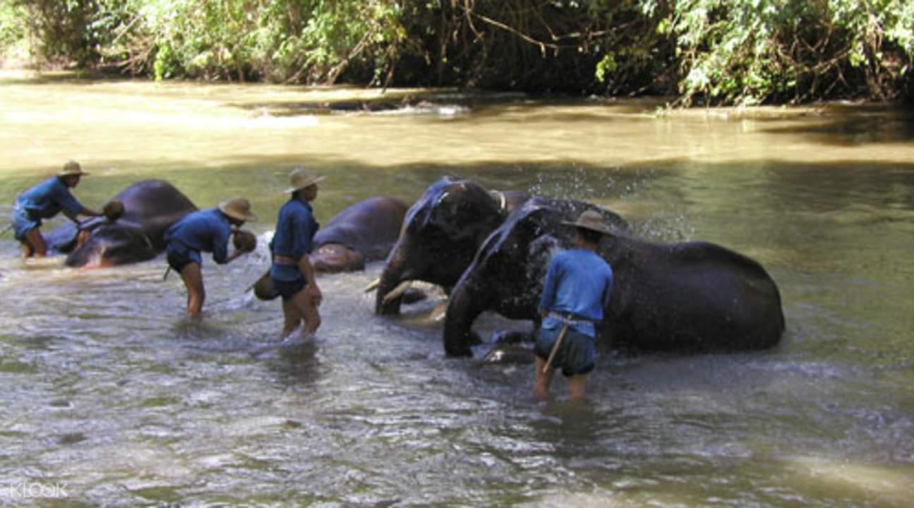 大象丛林保护区