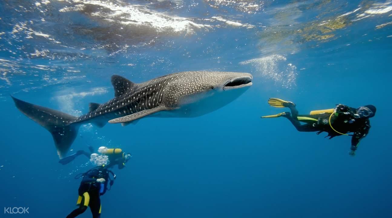 oslob whale shark watching tour