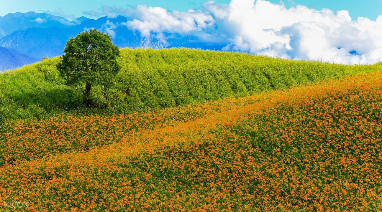 花莲六十石山