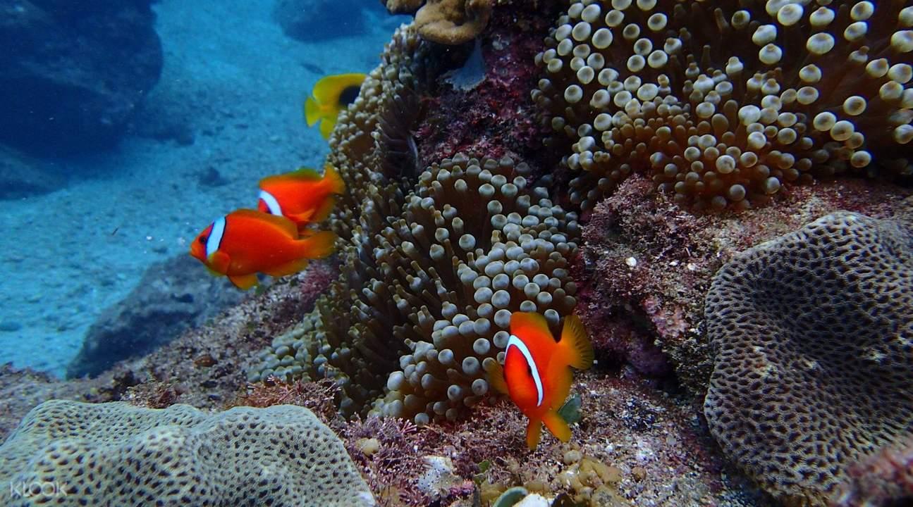 蘭嶼潛水體驗