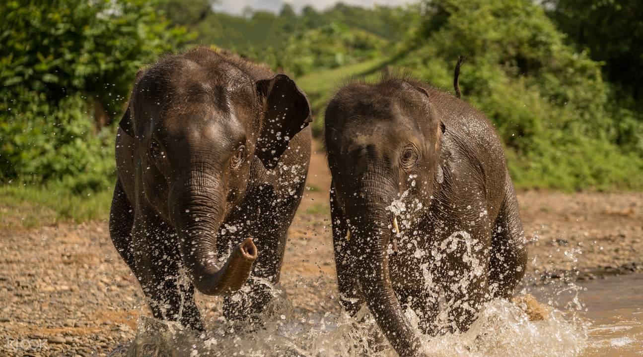 elephant village half day visit luang prabang