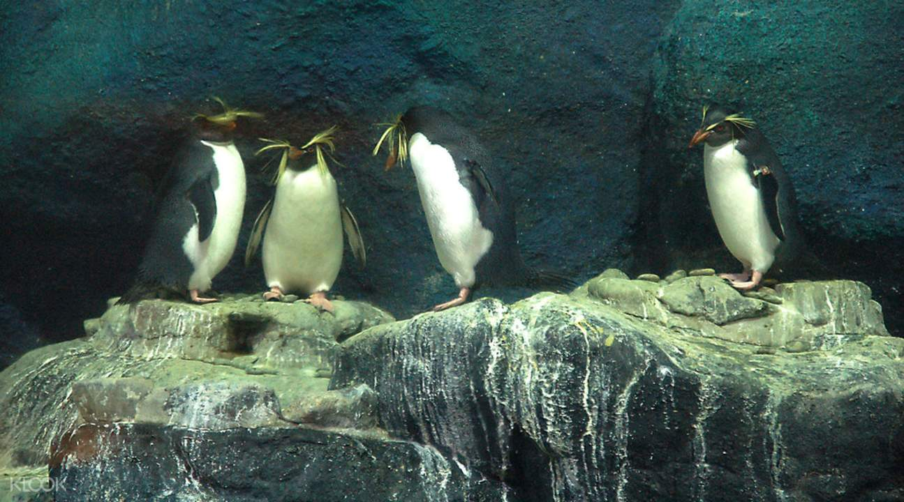 penguins at langkawi underwater world