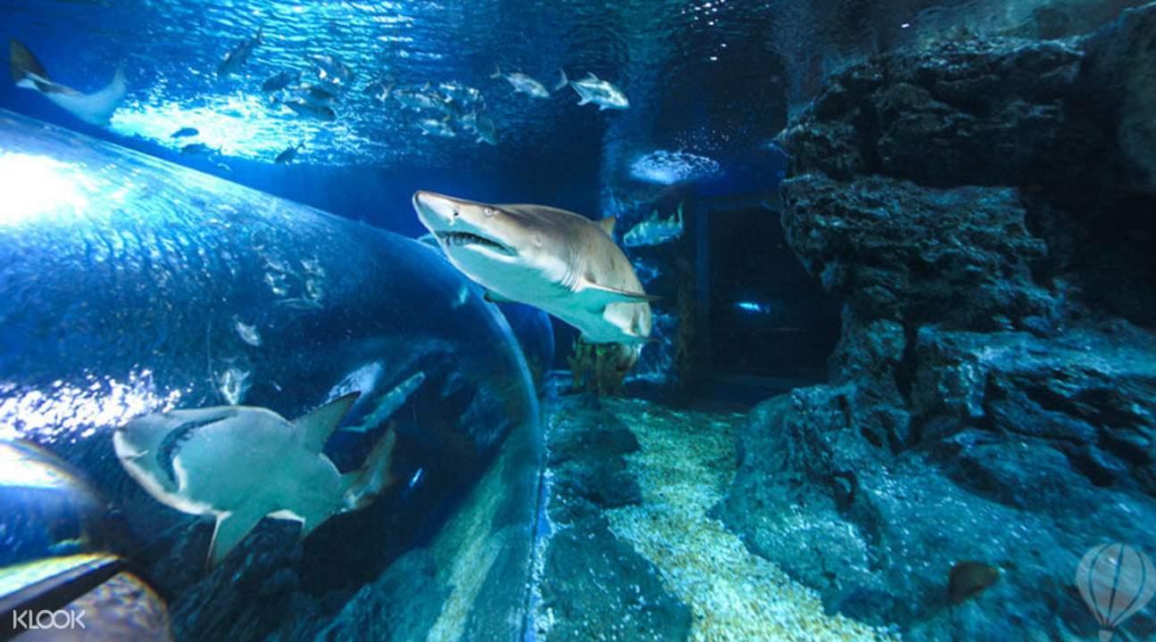泰国暹罗海洋世界喂食鲨鱼秀
