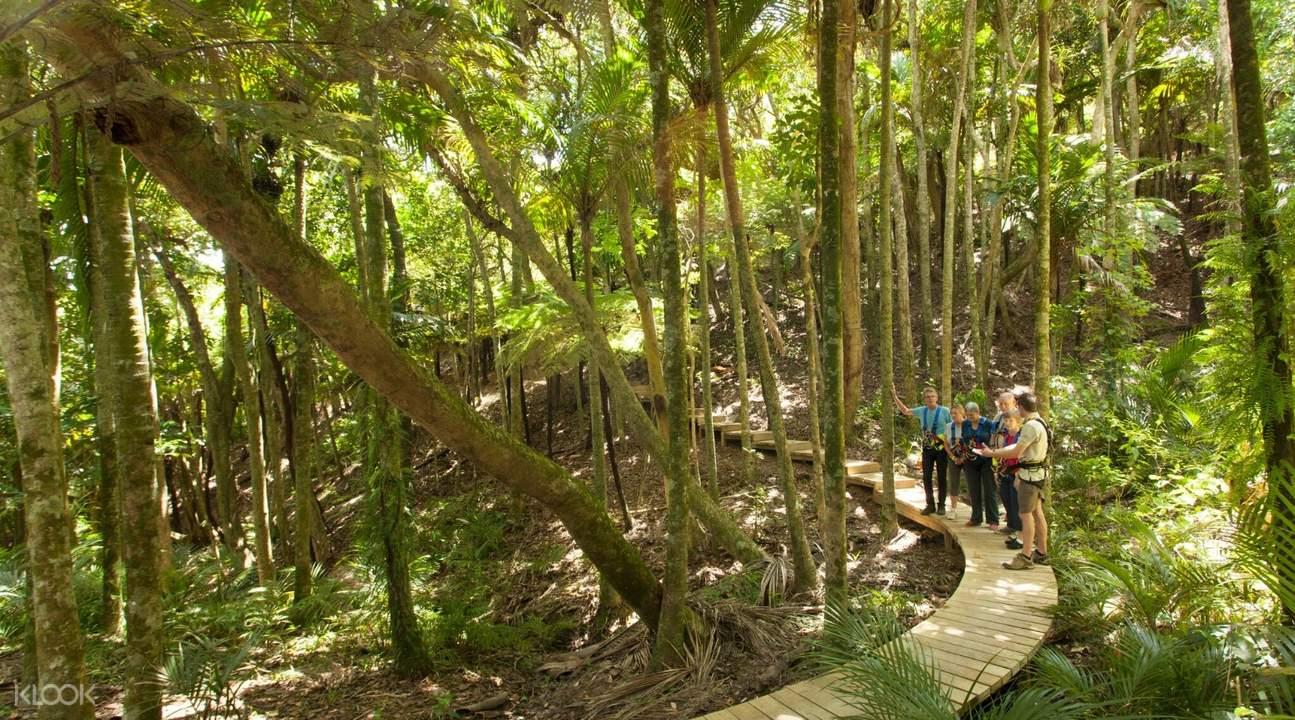激流岛高空滑索 & 当地丛林探险,激流岛高空滑索,激流岛森林