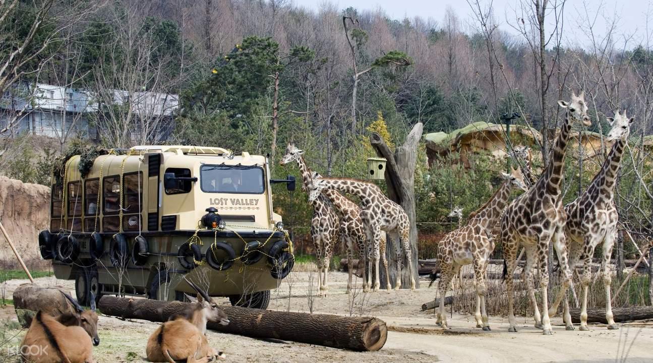 everland theme park seoul
