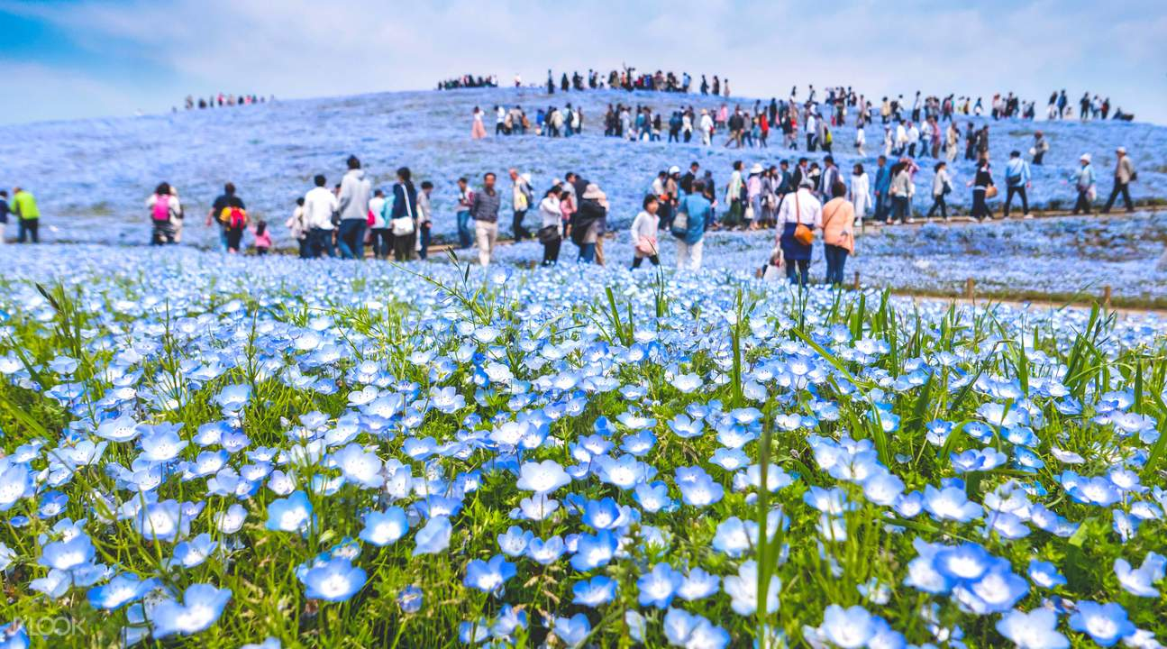 hitachi seaside park tour