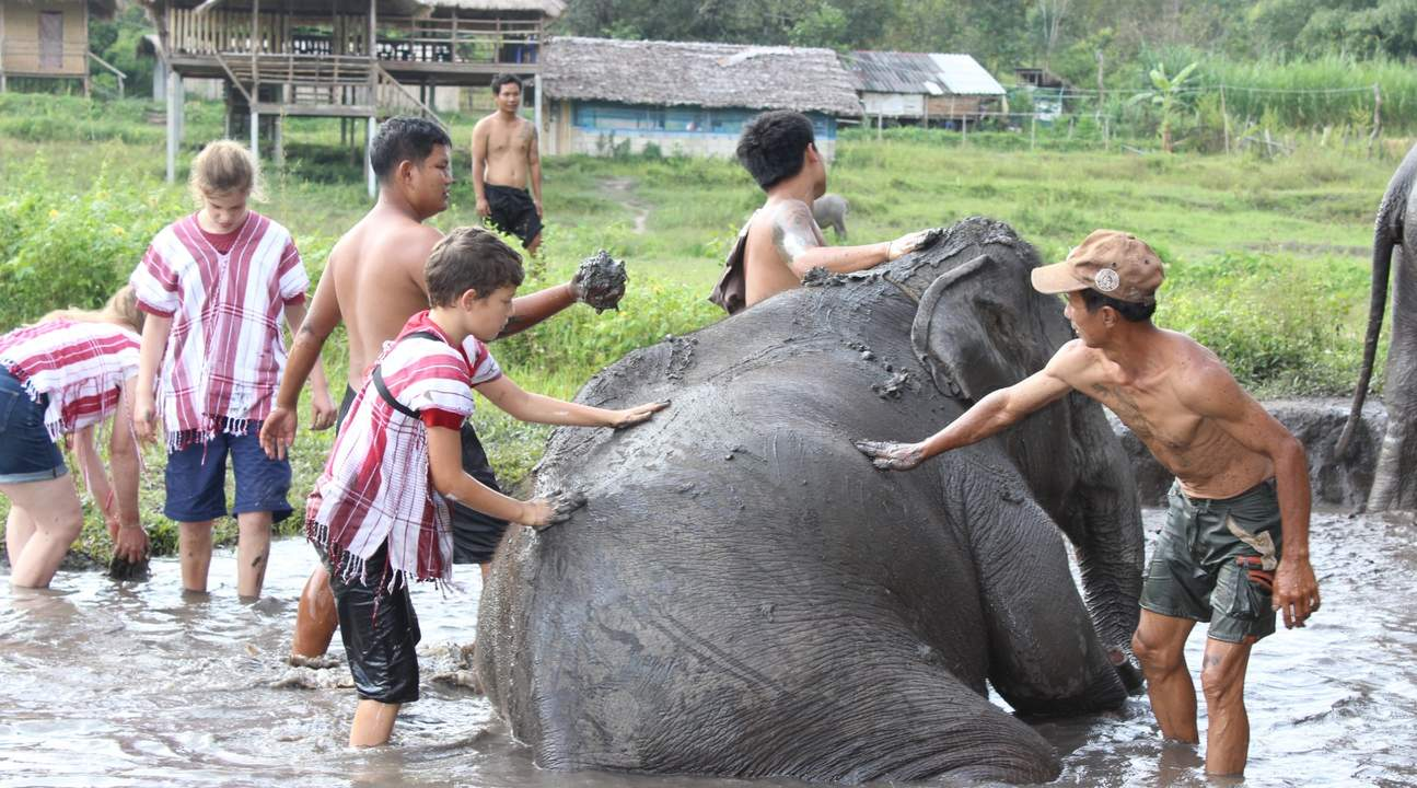 guests bathing elephant