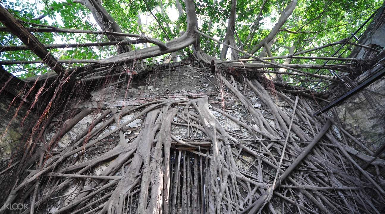 Tainan tree house