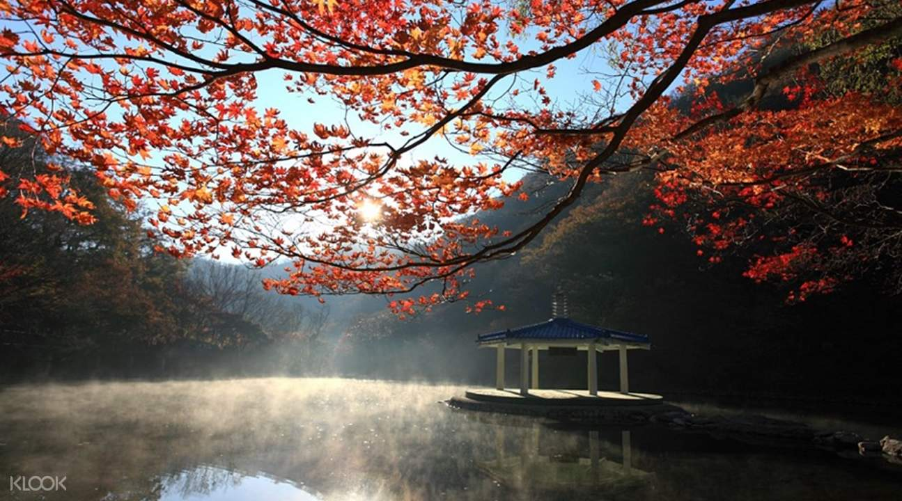 naejangsan national park from seoul, naejangsan national park tour, naejangsan national park autumn