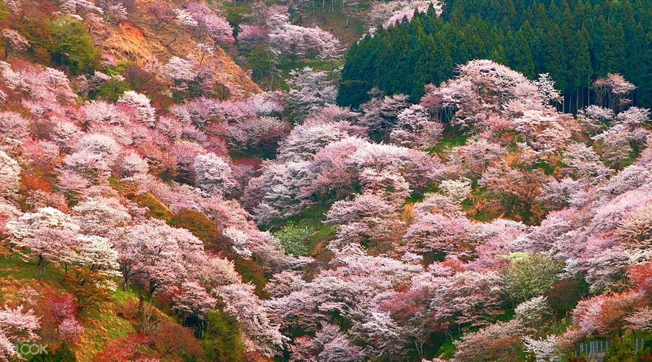 奈良吉野山