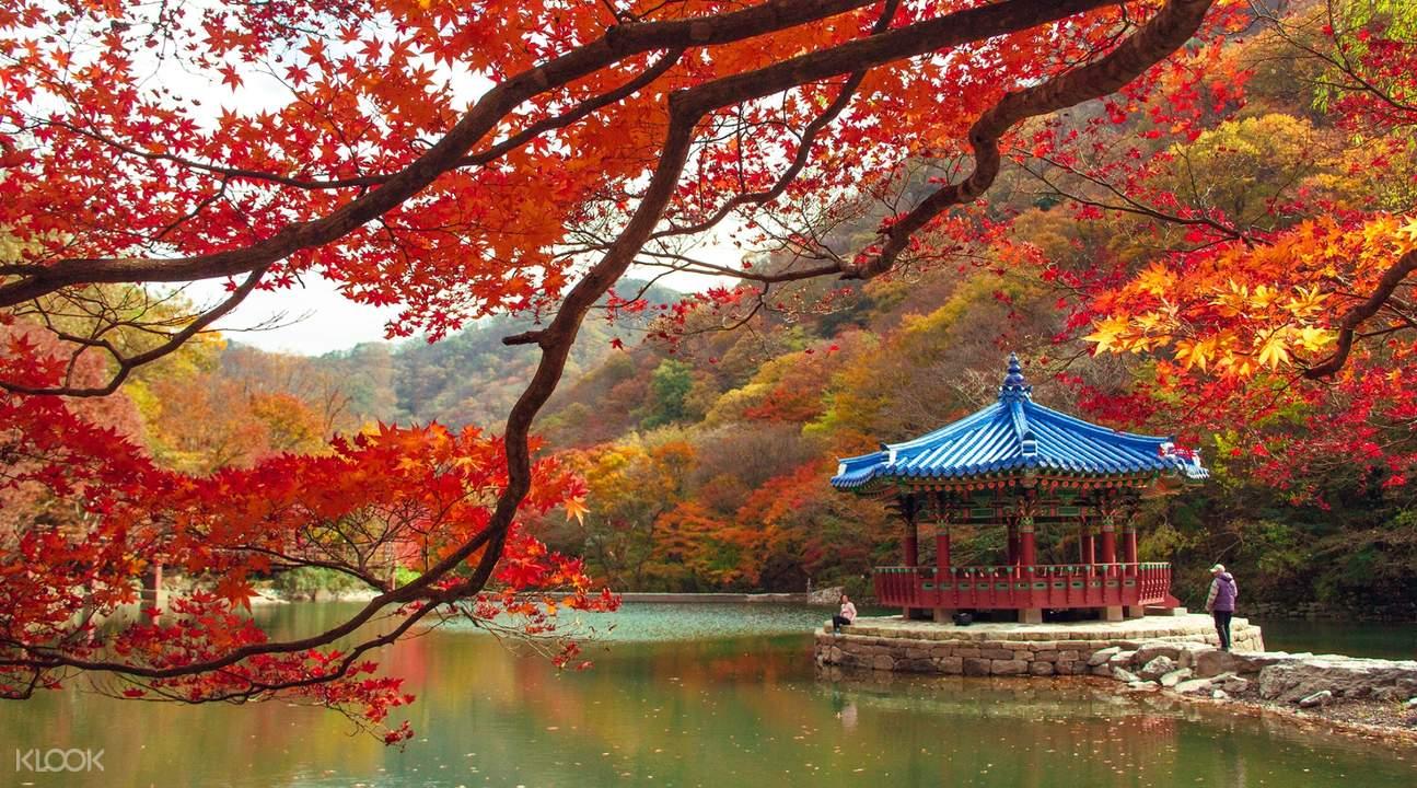 naejangsan national park from seoul, naejangsan national park tour, naejangsan national park autumn