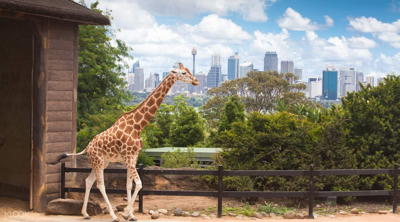 taronga zoo vip aussie gold tour