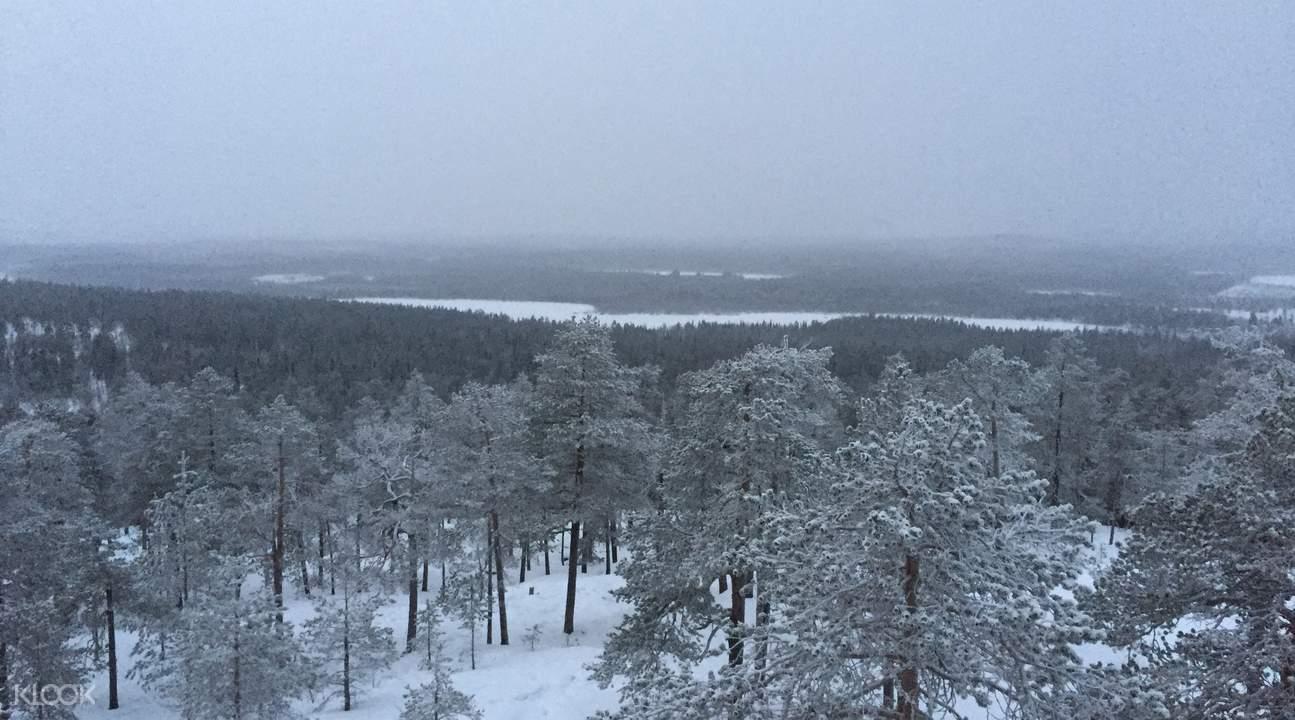 芬兰北极丛林