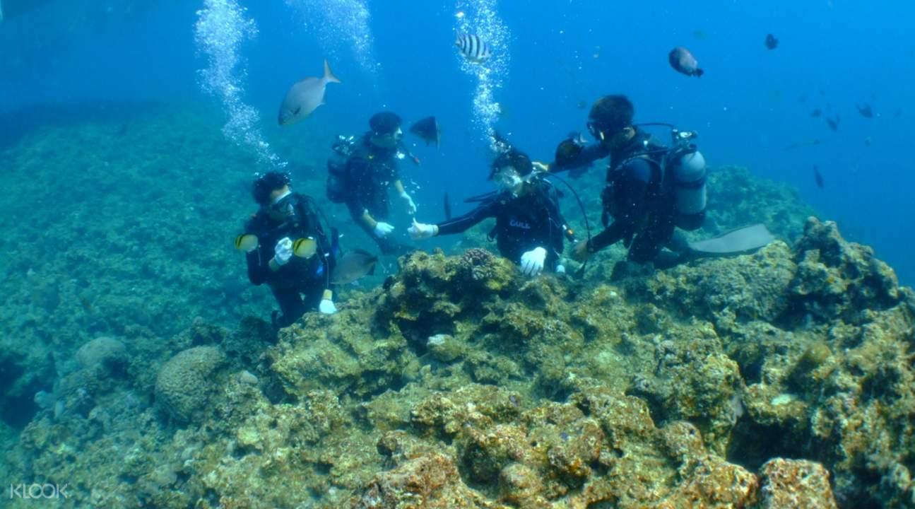 northern okinawa diving