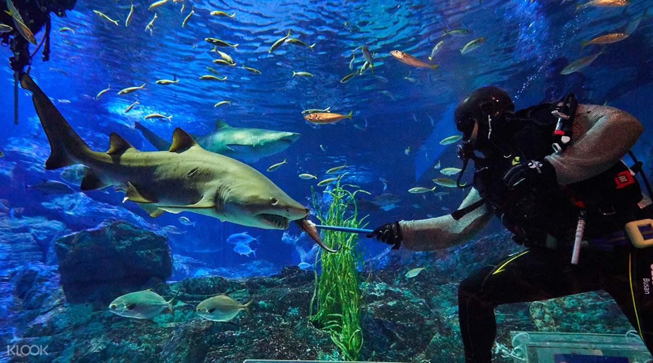 鲨鱼喂食表演