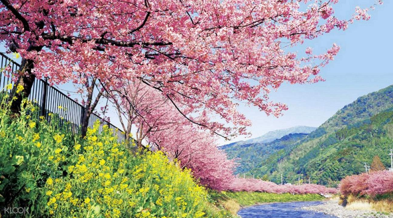 Japan Sakura 2017