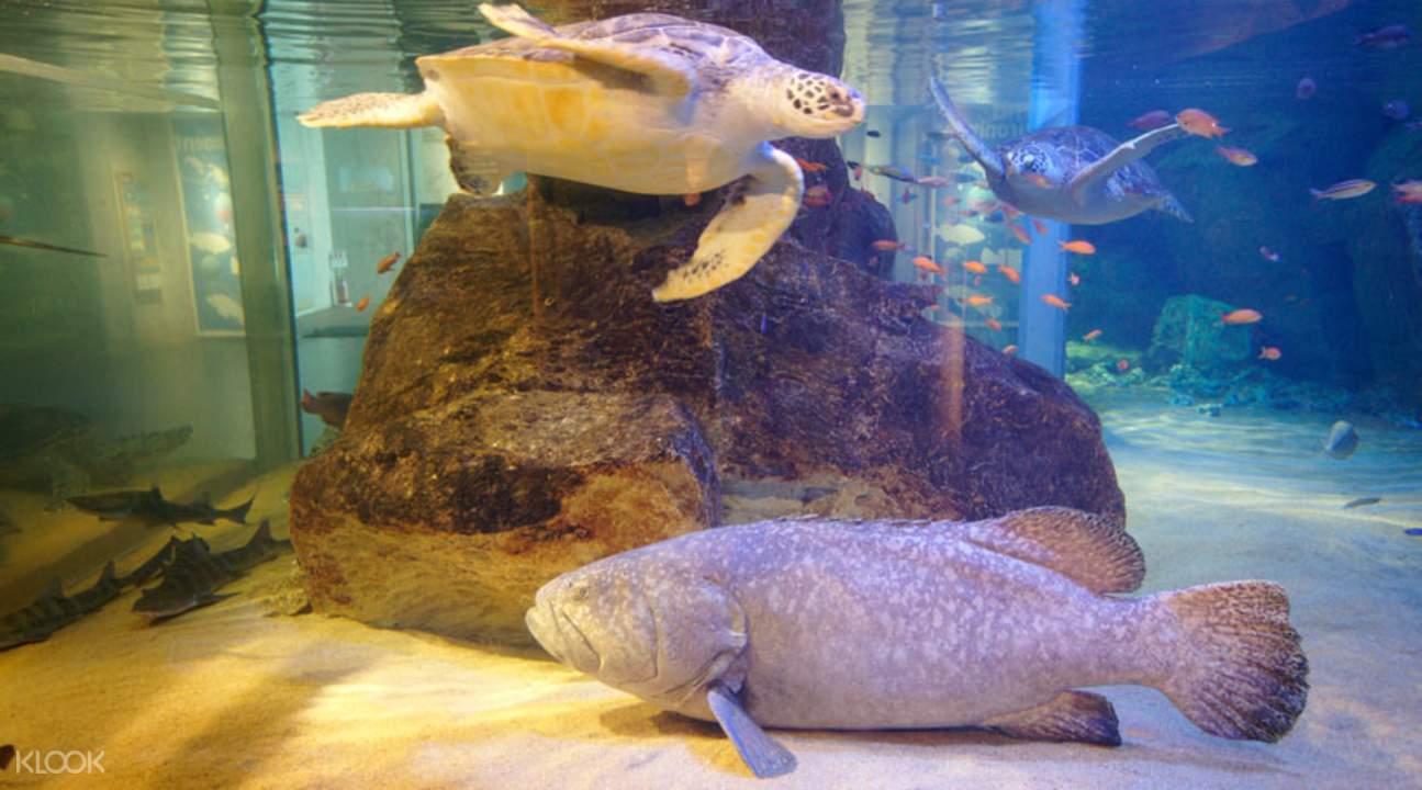 九十九島水族館