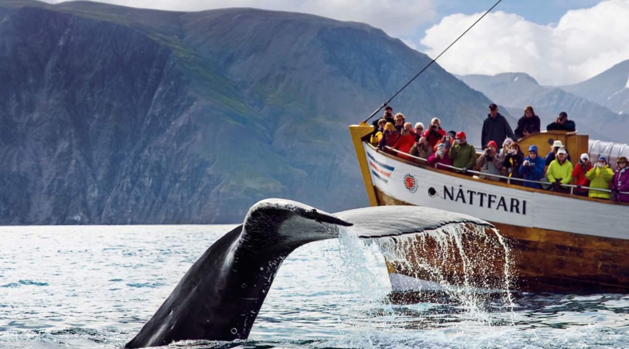 胡薩維克觀鯨