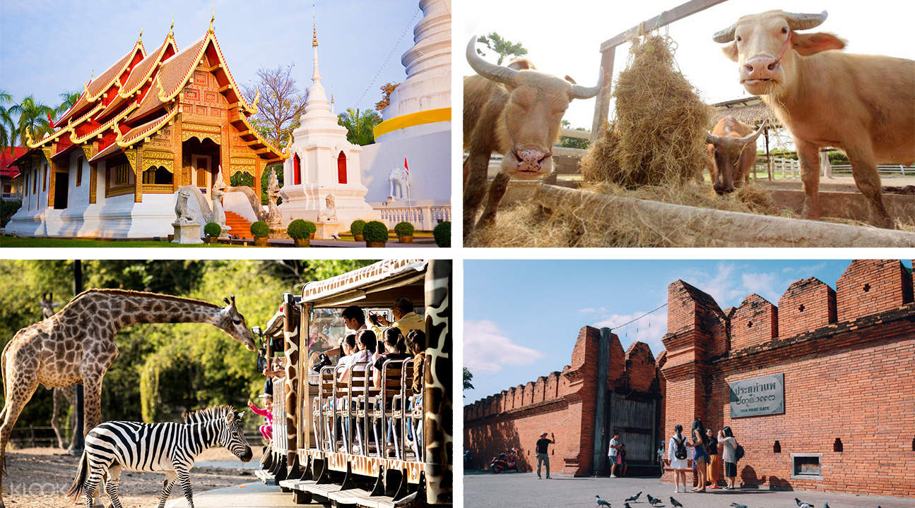 doi suthep, red brick wall, and animals in the night safari for the chiang mai custom tour