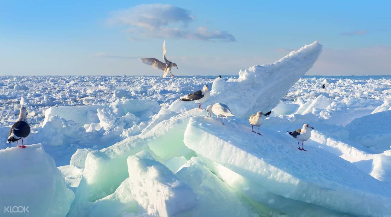 garinko流冰观光体验