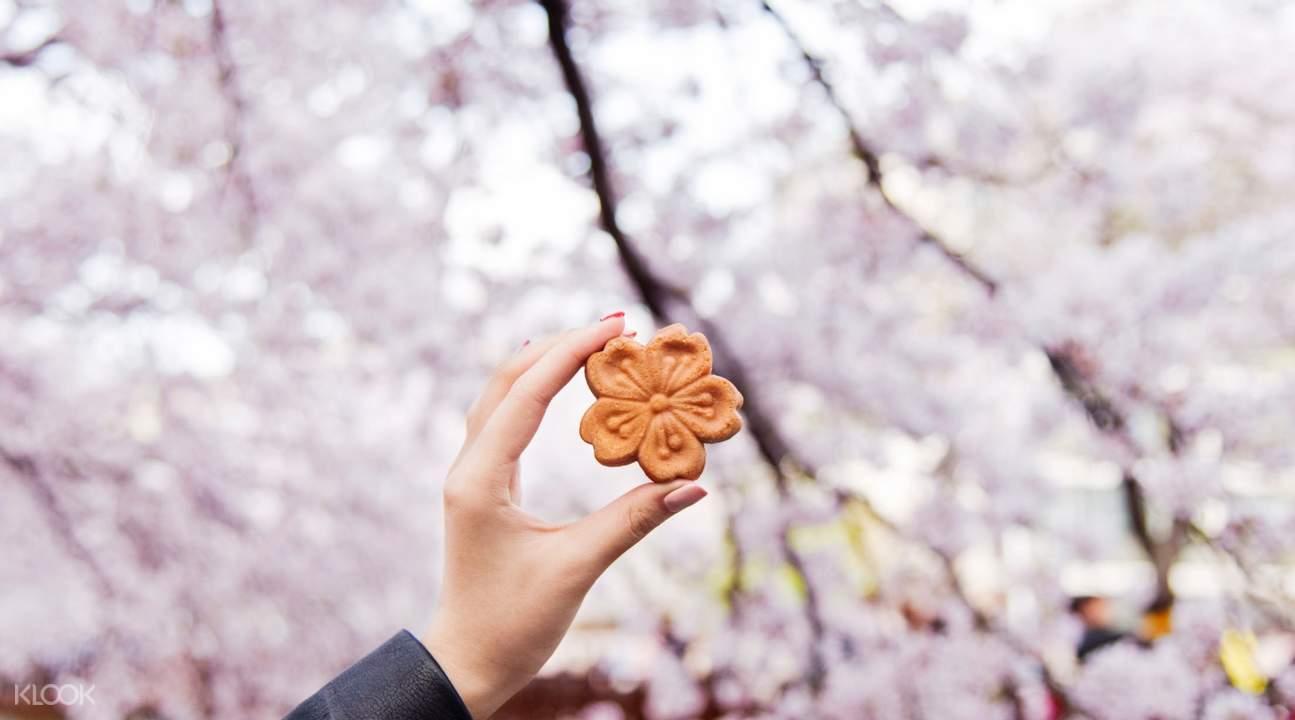 jinhae cherry blossom cake