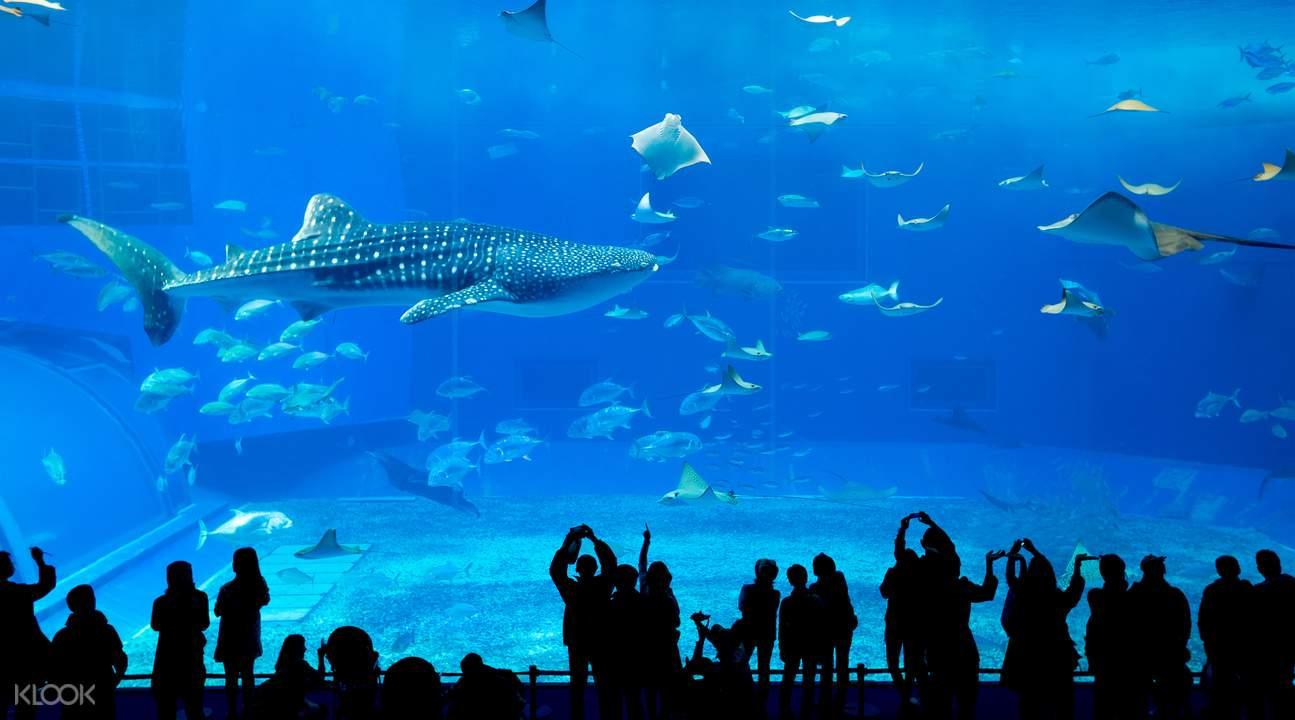 美丽海水族馆