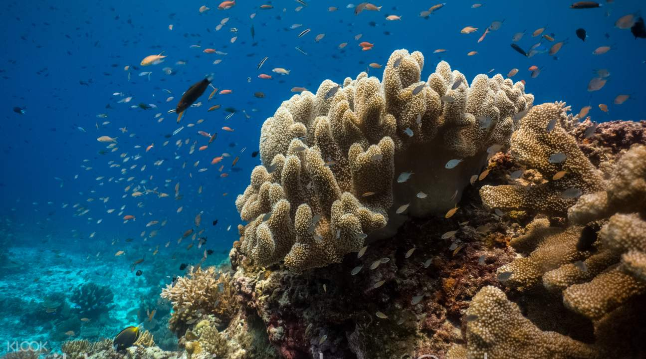 Puerto Princesa Bay Dive