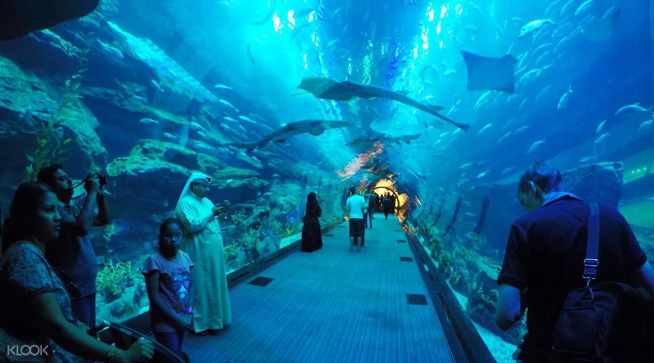 迪拜水族馆门票