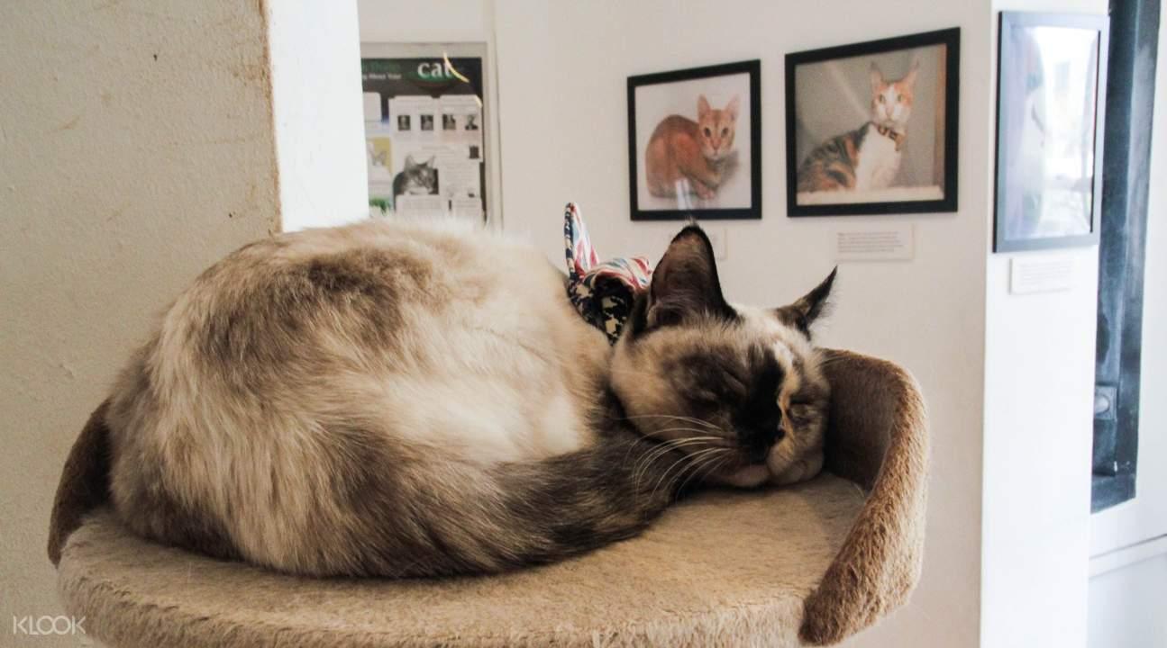 Cat Cafe sleeping cat